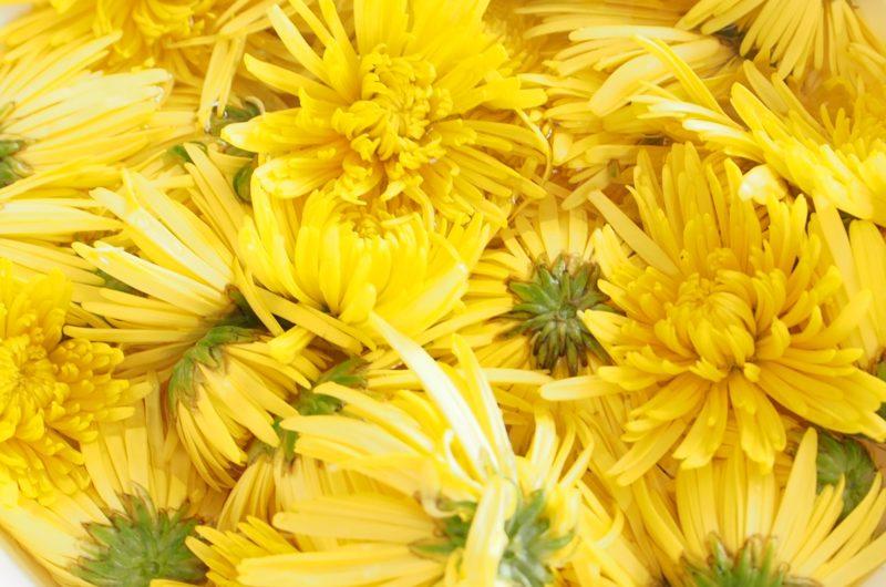 【あさイチ】菊なますのレシピ【9月9日】