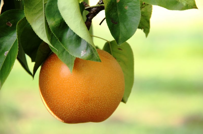 【相葉マナブ】丸ごと焼き梨のレシピ|市川の梨【9月20日】