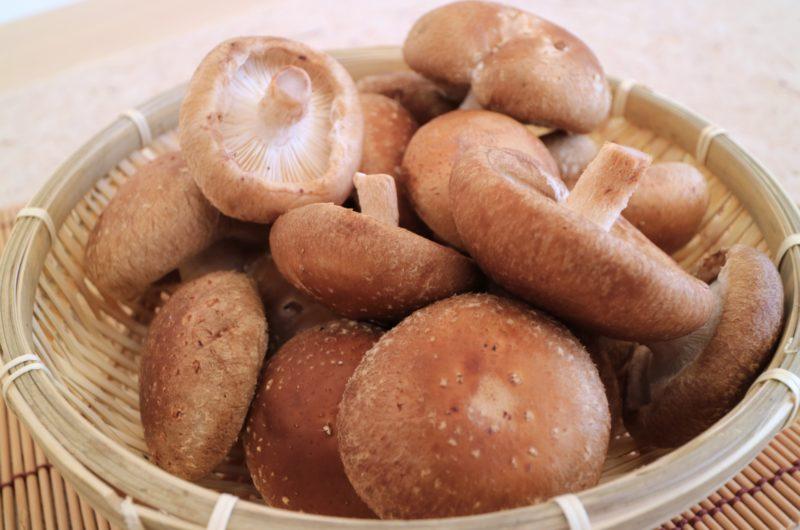【ボクを食べないキミへ】しいたけのジャージャー飯のレシピ|リュウジ【1月5日】