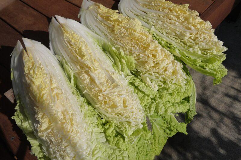 【相葉マナブ】よだれ白菜のレシピ【1月24日】