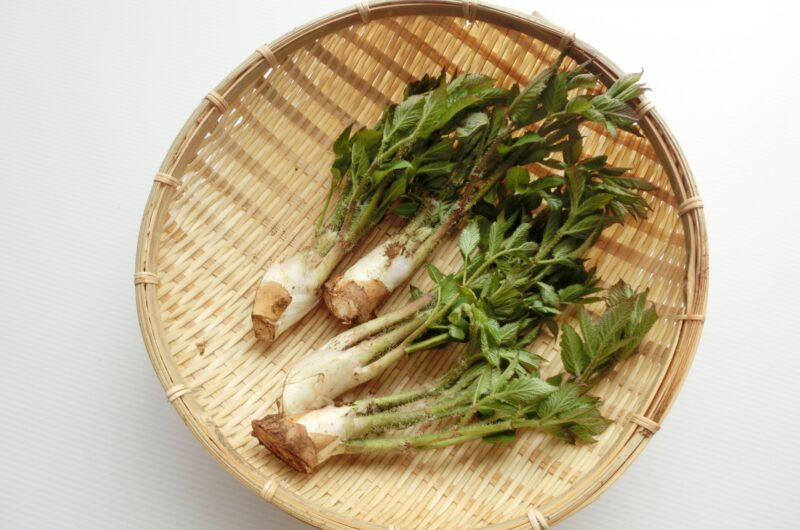 【きょうの料理】うど汁のレシピ|土井善晴【5月10日】