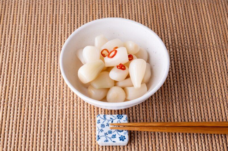【きょうの料理】らっきょうのスパイス甘酢漬けのレシピ 水野仁輔・伊東盛【6月14日】